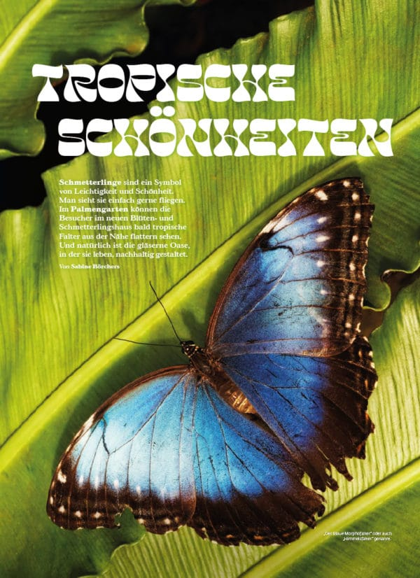 Top Magazin Frankfurt, Ausgabe Sommer 2021 - Schmetterlinge