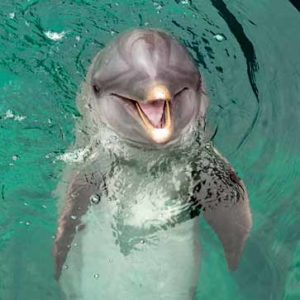 """""""Flipper"""" zeigt sein schönstes Hollywood-Lächeln."""