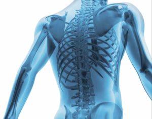 Muskel- und Skeletterkrankungen zählen zu den häufigsten Gründen für Krankschreibungen bei Menschen mit Bürojobs.