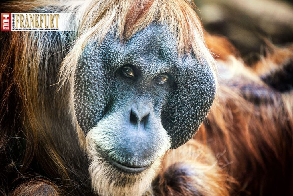 Fotostrecke Und Bericht: Der Zoo