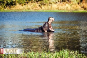 Entspannung pur im Hippo-Pool