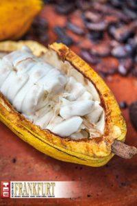 Das weiße Fruchtfleisch enthält die Kakaobohnen.