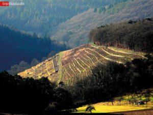 Die Weinregion zieht sich rund 100 Kilometer von Wertheim am Main bis Rothenburg ob der Tauber.