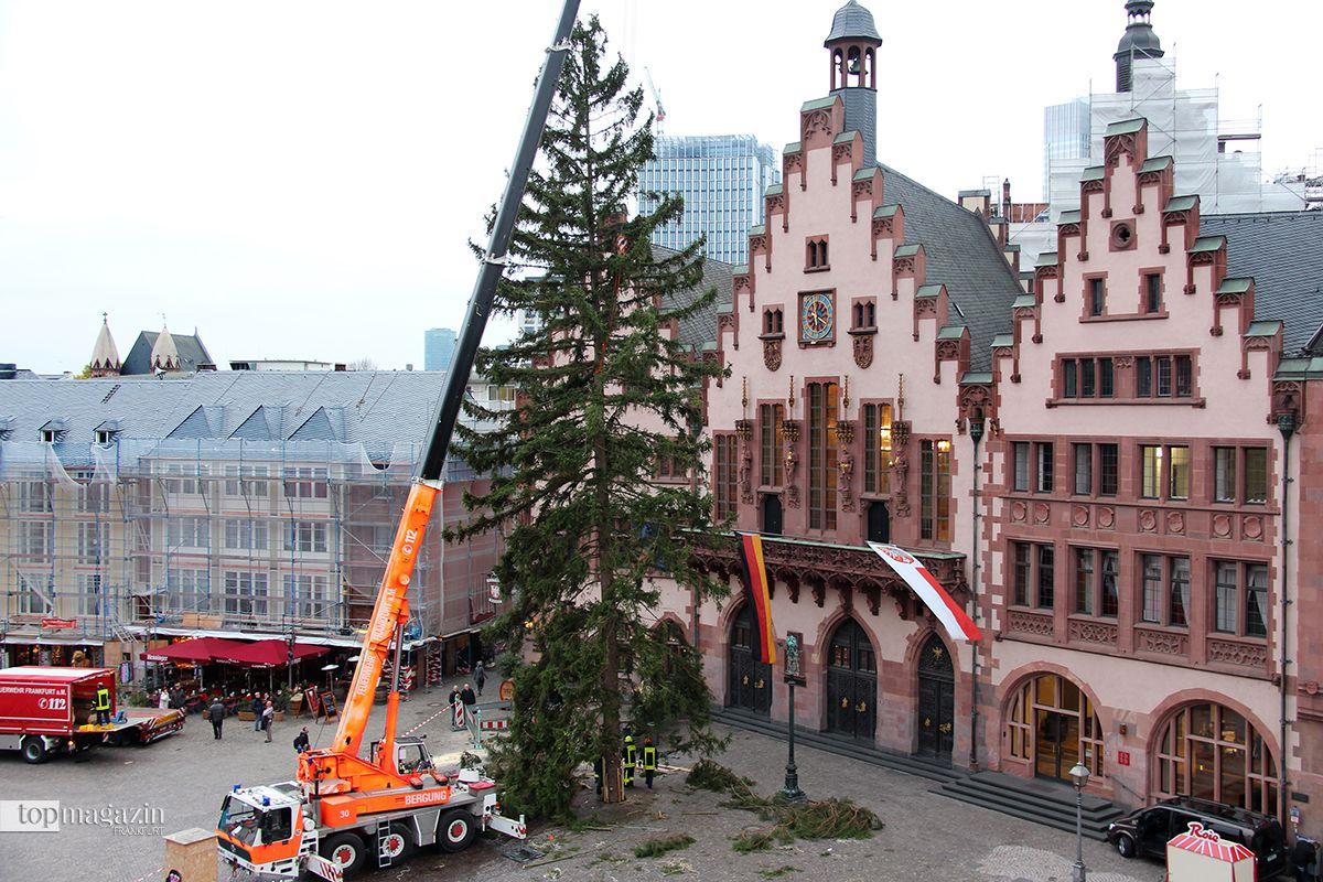 weihnachtsbaum in frankfurt auf dem r mer angekommen. Black Bedroom Furniture Sets. Home Design Ideas