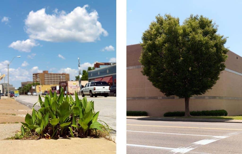 Die Werke 'Weeds' und 'Tree #1' von Anja Conrad