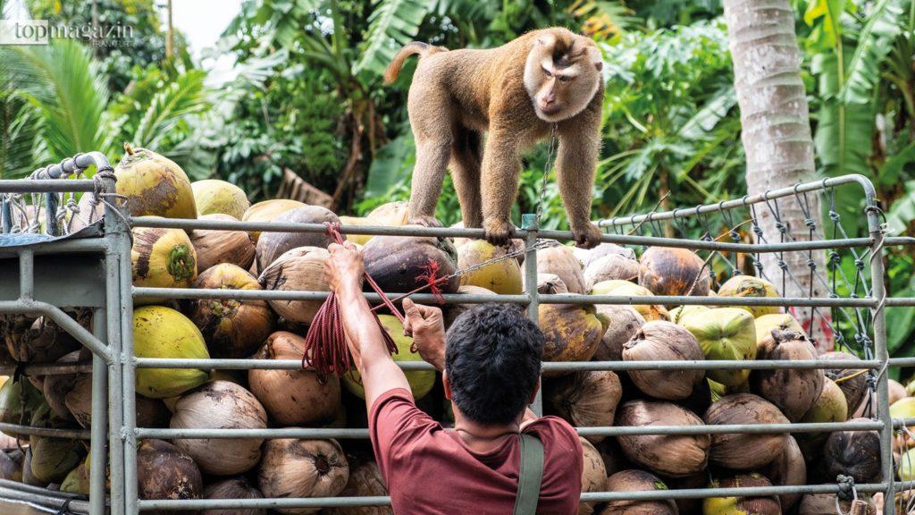 Kokosöl und Kokoswasser zählen zu den gesündesten Lebensmitteln