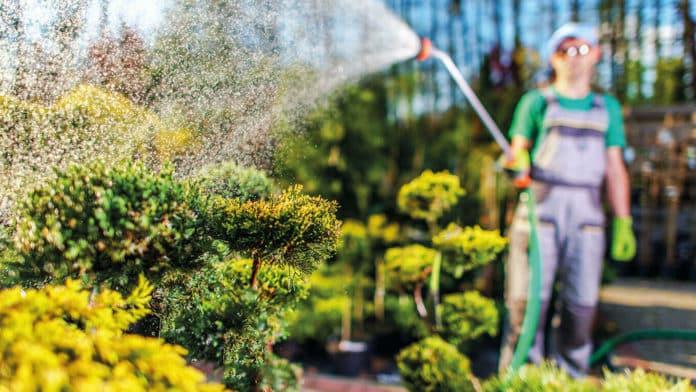 Wie Gartenprofis in Frankfurt mit Hitze umgehen