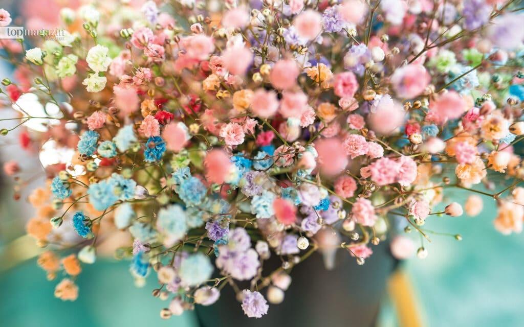 Jung, frisch, fröhlich - Rainbow-Schleierkraut ist der absolute Flower-Trend in der Generation Instagram
