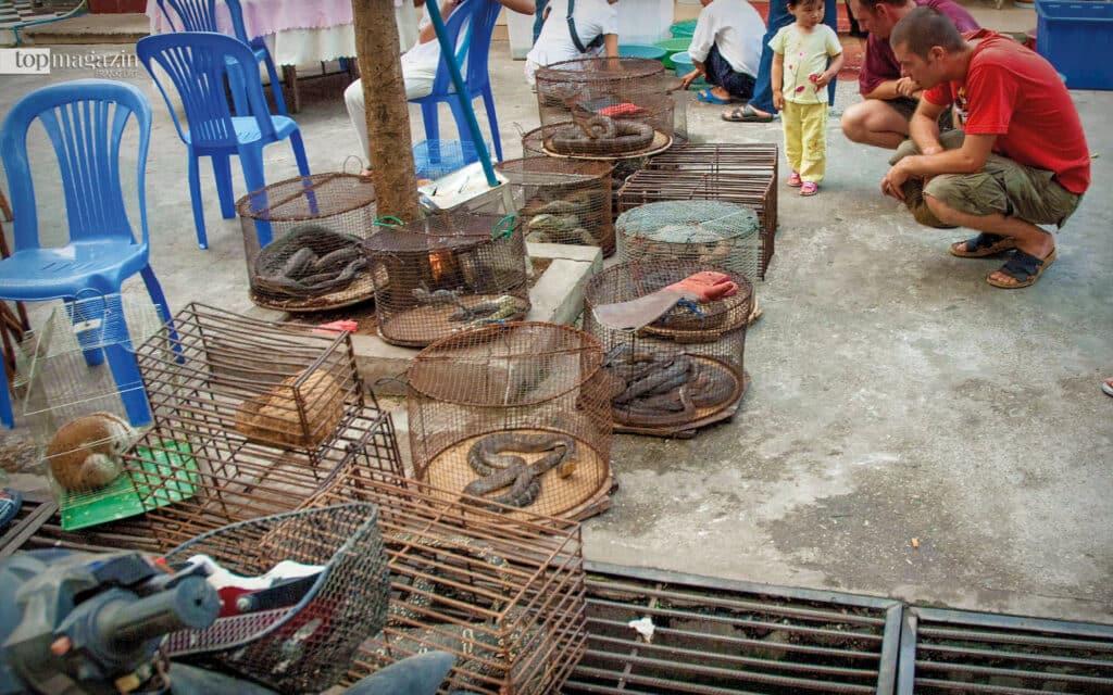 Hier besuchen zwei Forscher einen Wildtiermarkt in Myanmar